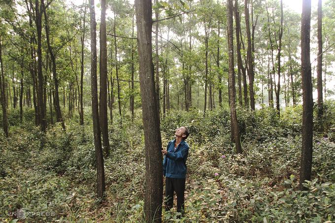 Nông dân thu tiền tỷ sau 10 năm trồng rừng gỗ lớn