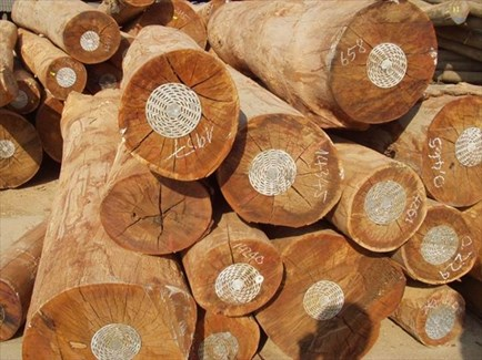 Rubber wood exports
